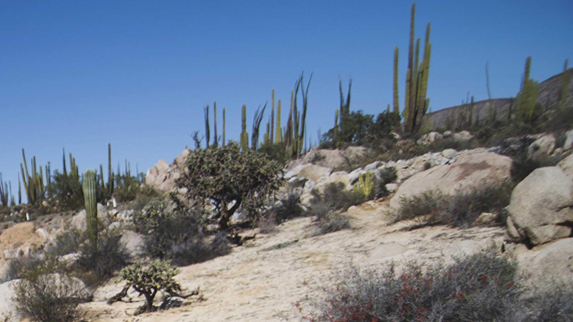 Valle de Los Cirios, Baja California