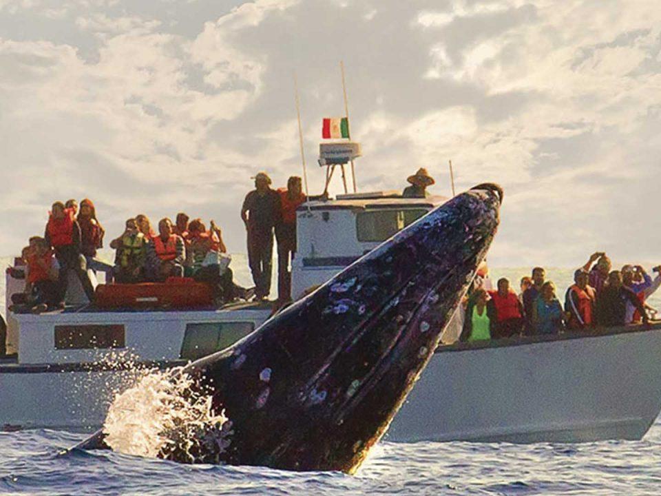 Watching the Gray Whale, Baja California